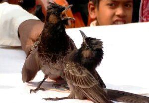 ১৪ বুলবুলির ঝুঁটি কাটিয়ে হিরো বাজার পাড়ার রাহুল 2