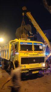 মেডিকেল কলেজ চত্বরেই দাঁতালকে ঘুম পাড়ালেন বন আধিকারিকরা, হাঁফ ছেড়ে বাঁচলেন মেদিনীপুর শহরবাসী 3
